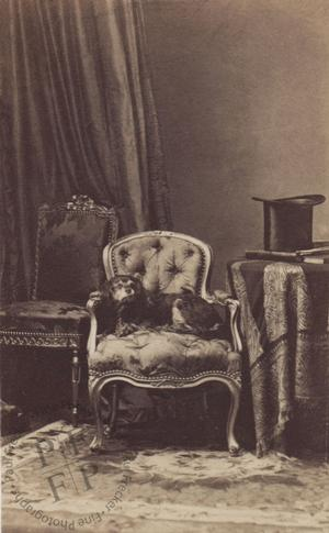 A dog on an armchair